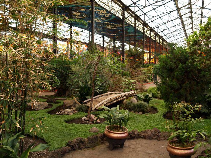 Volcanes de m xico 2008 toluca for Informacion sobre el jardin botanico